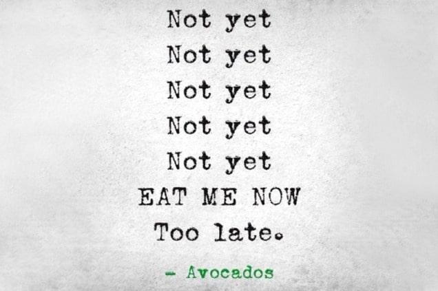 Avocado Life Cycle